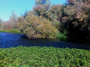 Russian River 10-31-09 #1