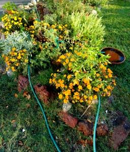Our Little Garden Fall 09