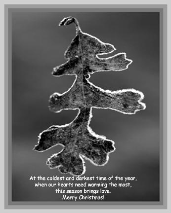 0025-2013--Oak Leaf with Ice--web